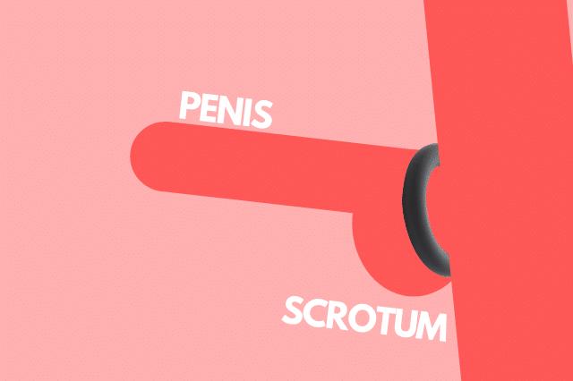 penisring gebruiken