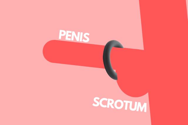cockring gebruiken